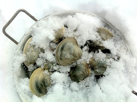 Creamy Goan Clams on http://www.theculinarylife.com