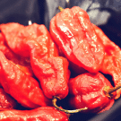 Behold, the Ghost Pepper – Bhut Jolokia
