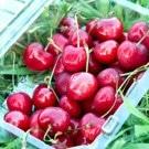 Strawberry Cherries