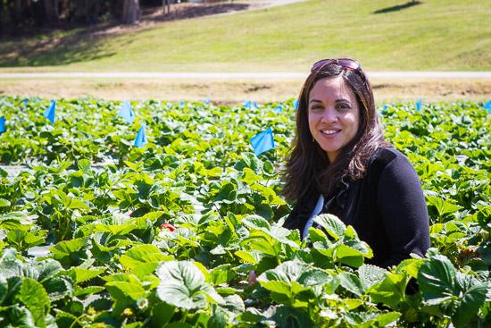 California Strawberries Farm Tour on http://www.theculinarylife.com/2014/california-strawberries-splendid-tour